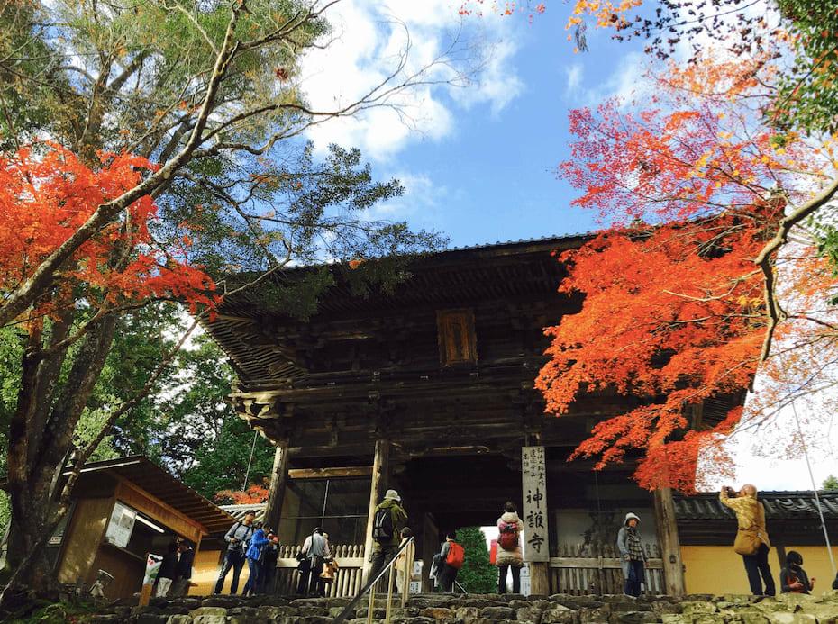 高 雄 神 護 寺 的 晴 空 與 楓 紅