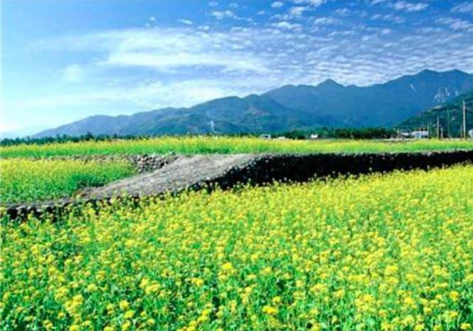 圖 片 來 源 : 花 東 縱 谷 國 家 風 景 區