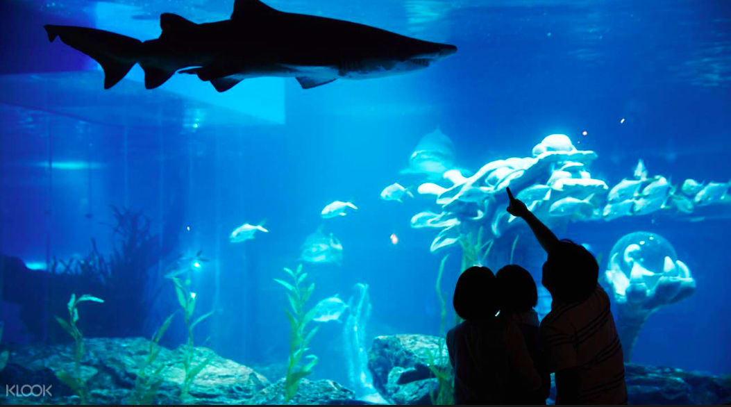 SEA LIFE釜山水族館
