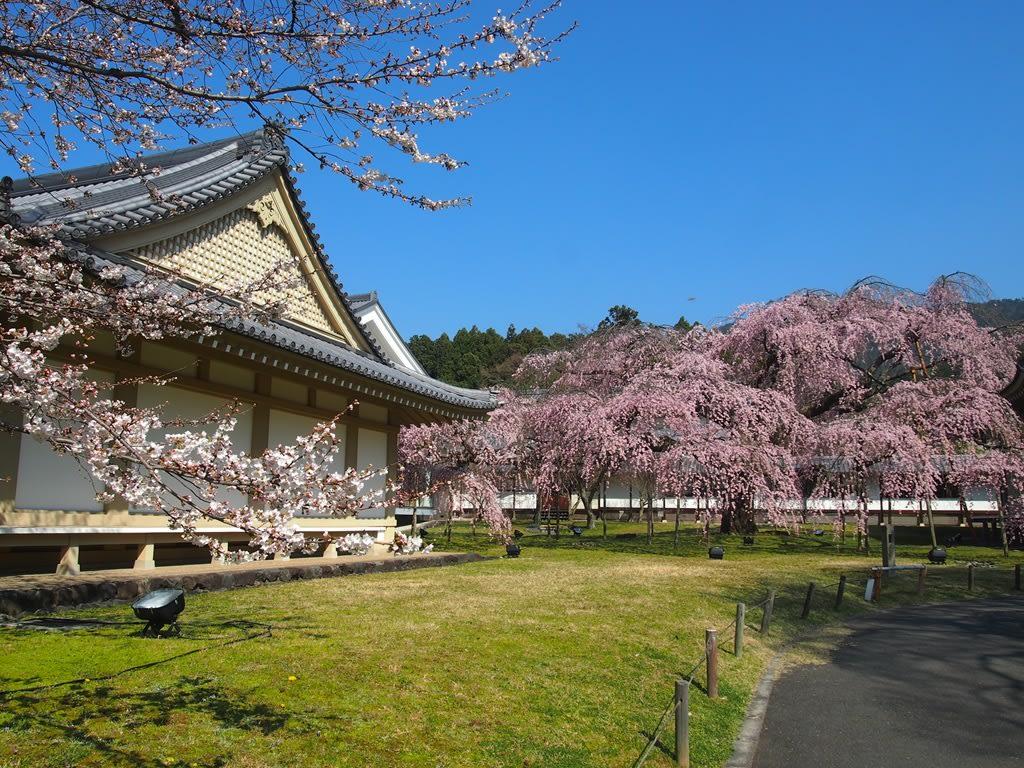 圖片來源:京都旅屋