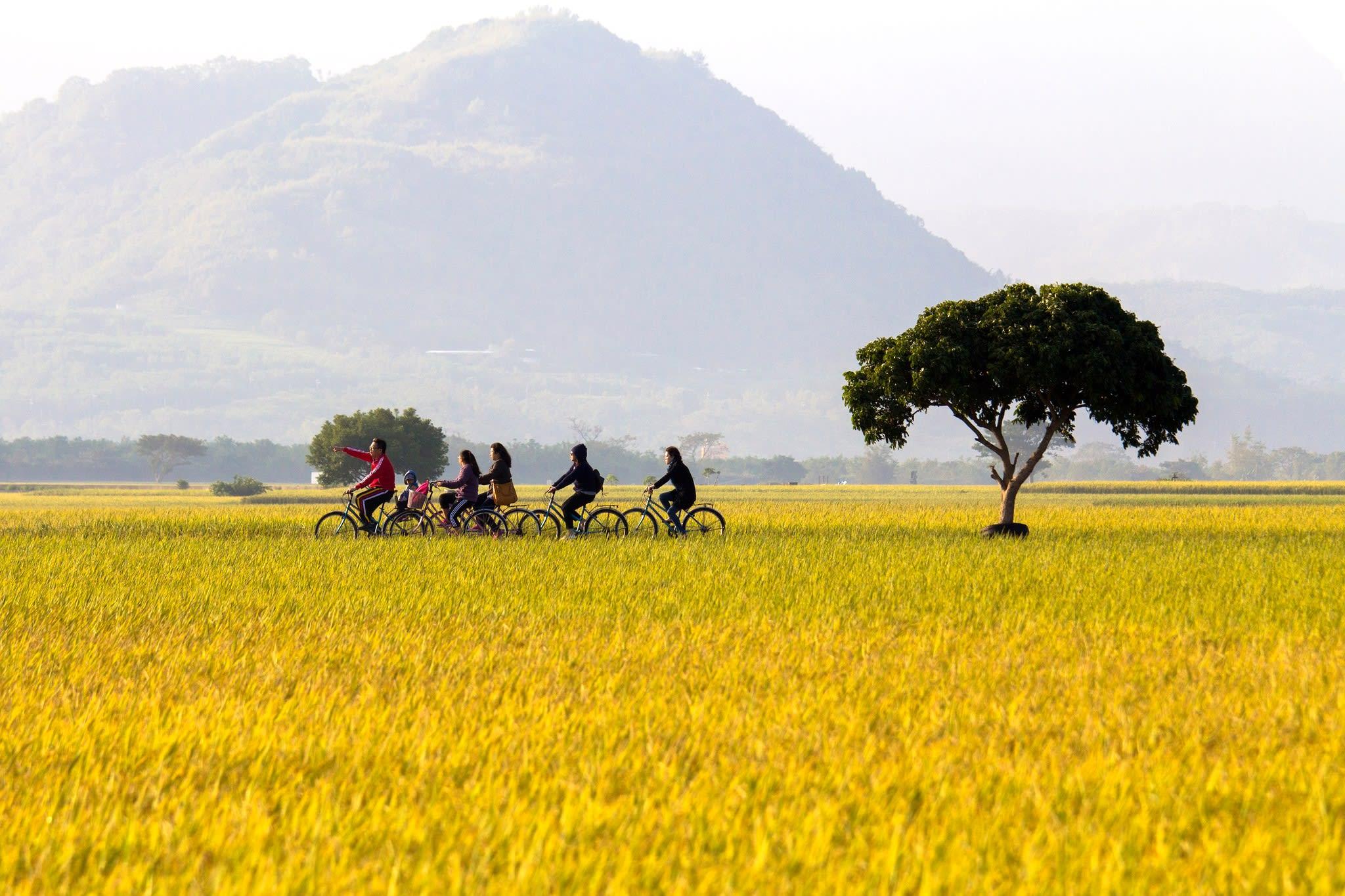 騎著單車漫遊伯朗大道,感受被金黃稻田簇擁的美好氛圍。(Flickr授權作者-Vincent Chien)