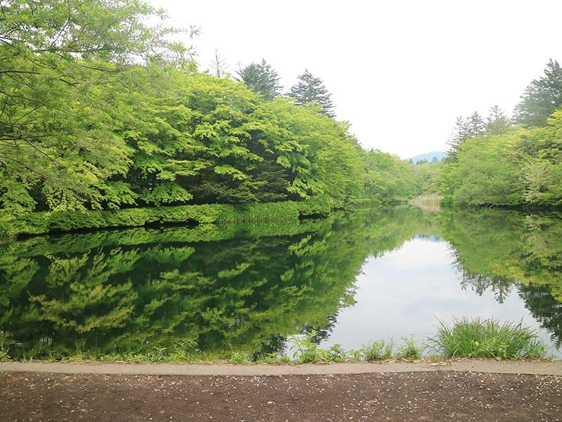 夏天充滿綠意的雲場池。