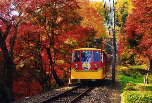 高尾山的楓葉景色。|來源:www.yokoso-japan.jp
