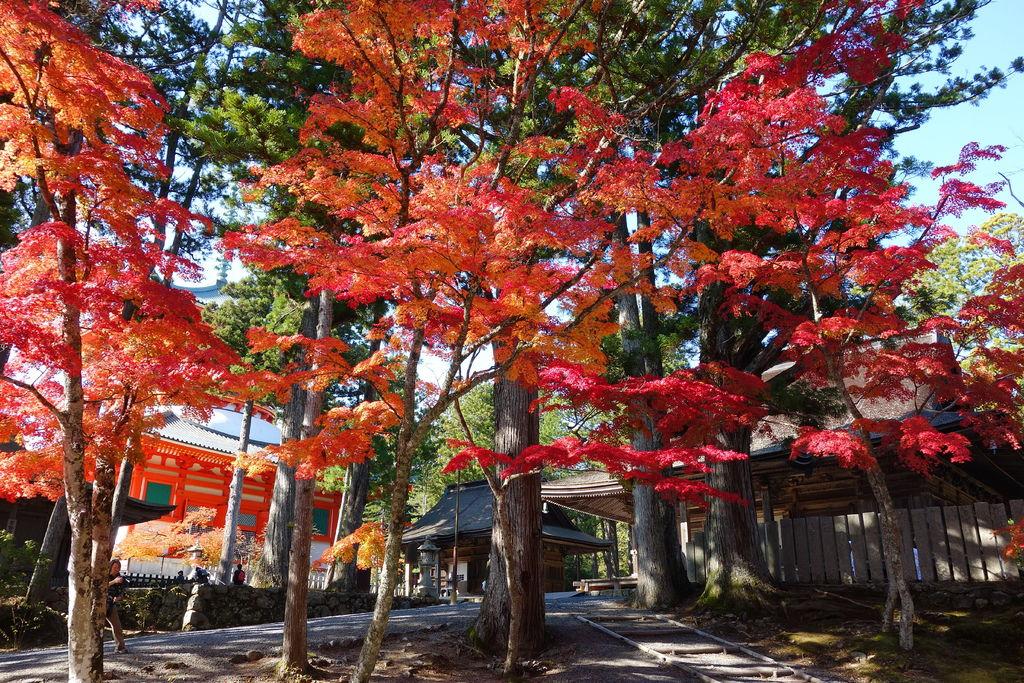入 選 世 界 遺 產 , 高 野山 ( 圖 片 來 源 : goo.gl/gC2NTg )