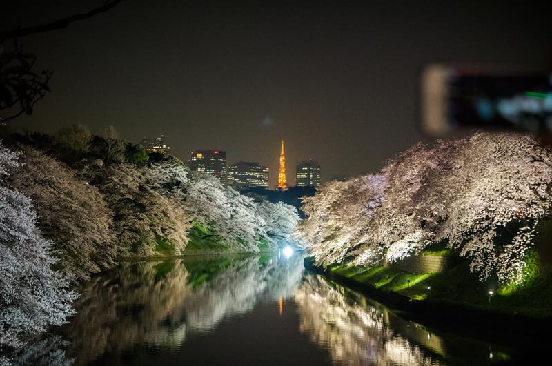 千鳥淵夜櫻(照片來源:中岑 范姜@Flickr)https://goo.gl/CEWSp8