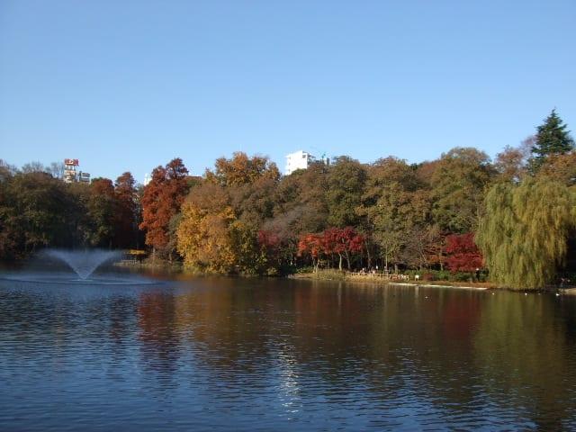 井之頭恩賜公園也可以欣賞到楓葉喔。|來源:comolib.com