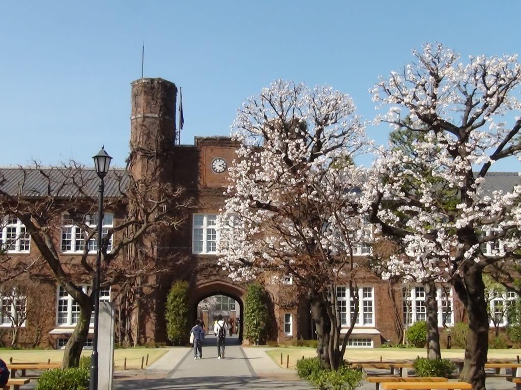 雪 梅 點 綴 立 教 大 學 ( 圖 片 來 源 : goo.gl/hKD6kT )