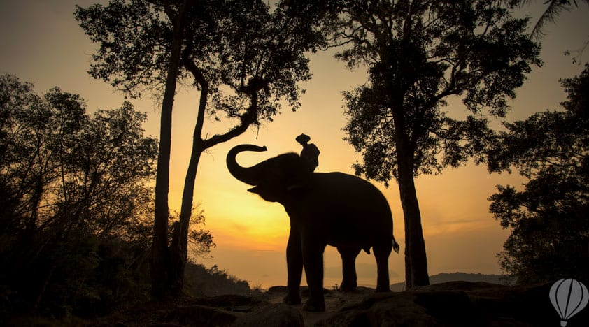 ec327758-chiang-mai-elephant-camp-4