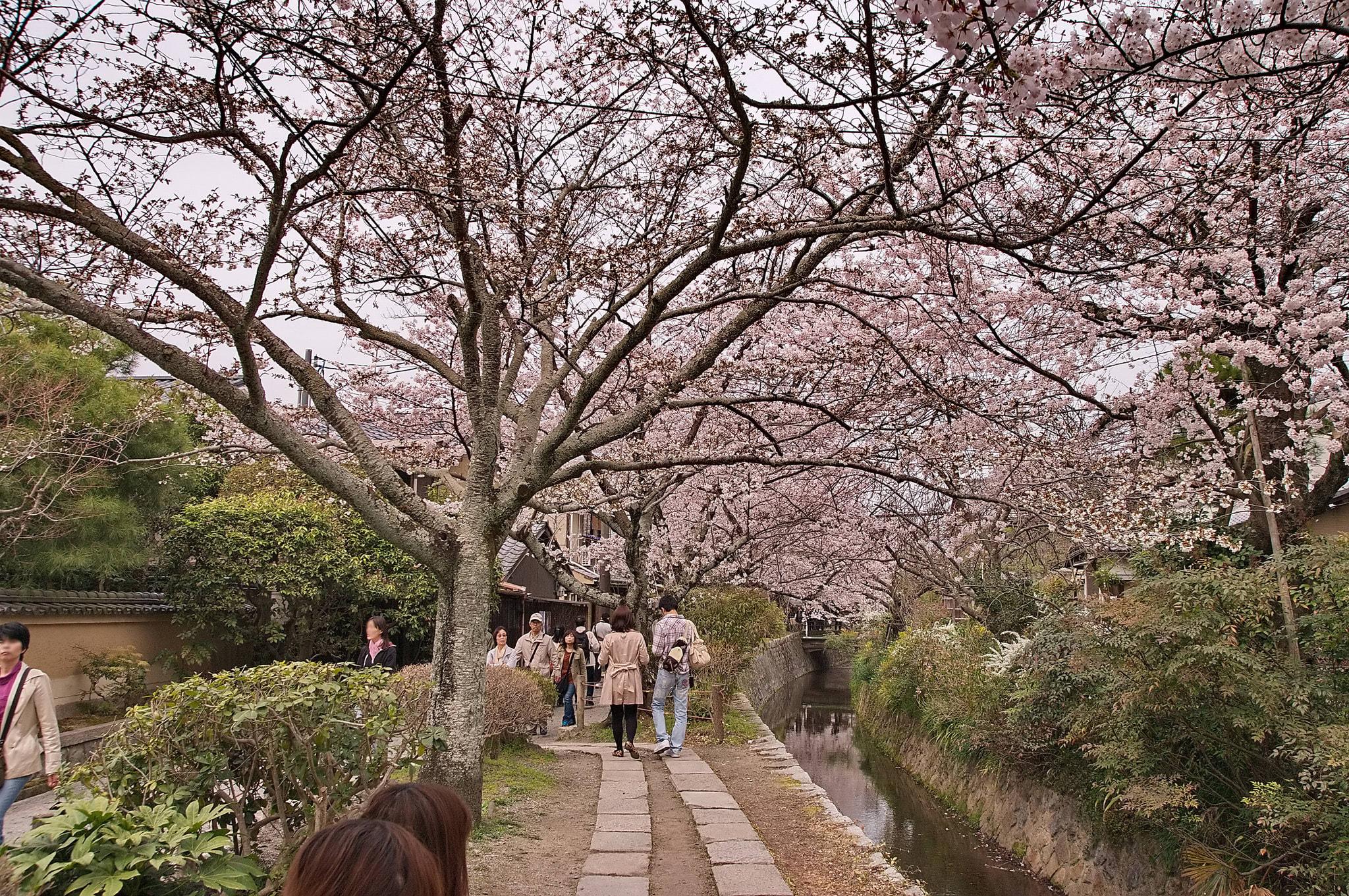 哲 學 之 道 Photo by Kyoto-Picture CC by 2.0。