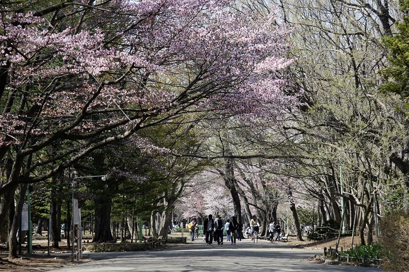 圓山公園(照片來源:札幌觀光協會官網)https://goo.gl/4pgrtg