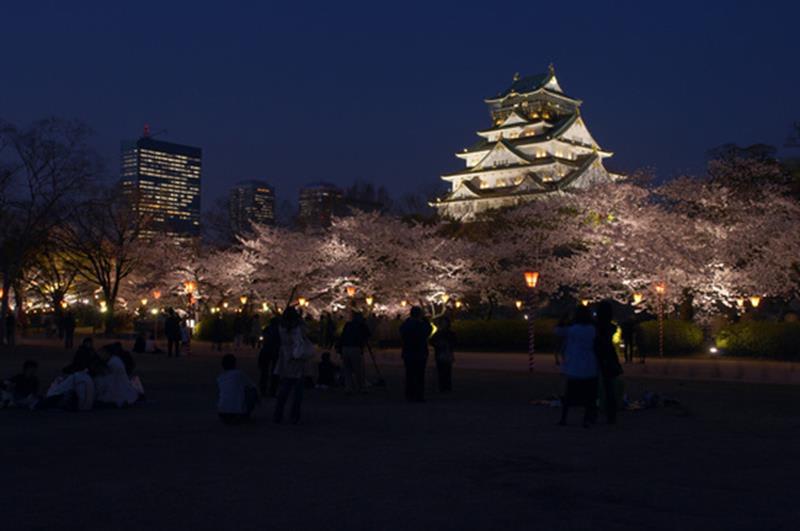 大阪城夜櫻(照片來源:大阪觀光局PHOTO LIBRARY)http://www.osaka-info.jp/photo_library/