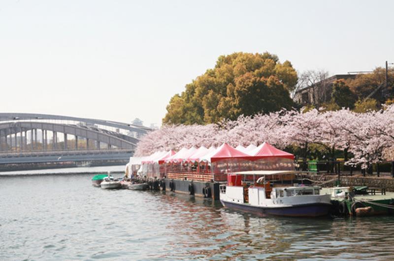這個春天就改搭櫻花船及水上巴士賞櫻!(照片來源:大阪觀光局PHOTO LIBRARY)http://www.osaka-info.jp/photo_library/