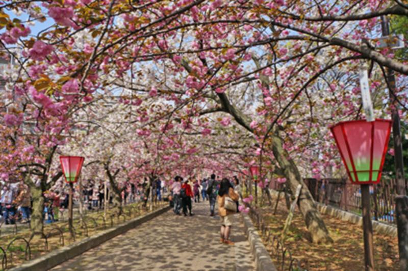 造幣局及櫻花道(照片來源:大阪觀光局PHOTO LIBRARY) http://www.osaka-info.jp/photo_library/