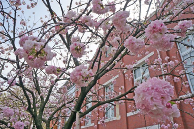 造幣局(照片來源:大阪觀光局PHOTO LIBRARY) http://www.osaka-info.jp/photo_library/