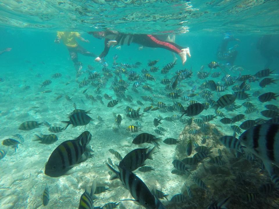 巴里卡薩島浮潛景象|圖片來源:Ann Shih
