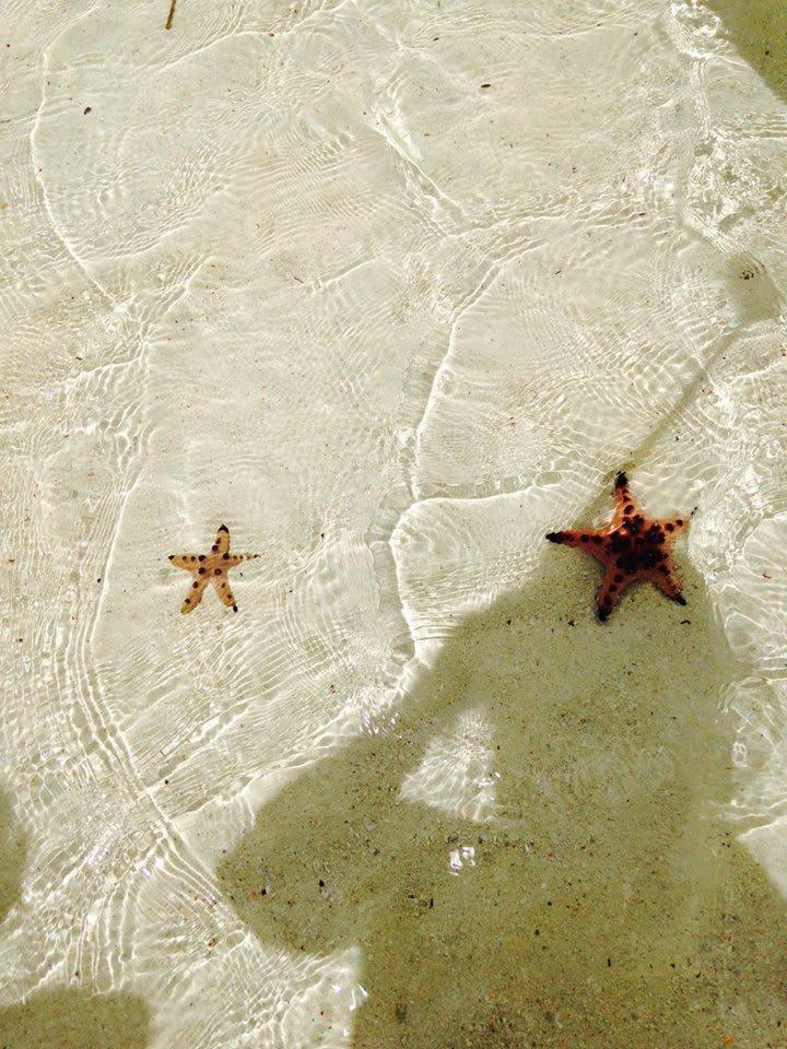 處女島的沙質非常細緻,到處都看得到海星。圖片來源:Ann Shih