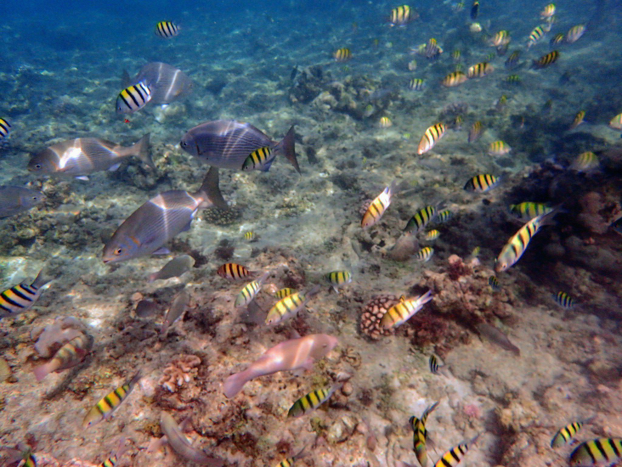 巴里卡薩島浮潛景象|圖片來源:Vanessa