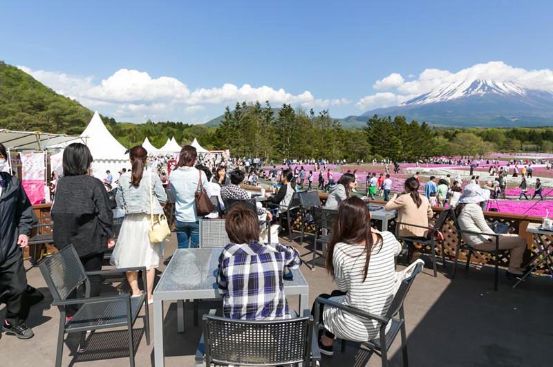 觀景咖啡(照片來源:富士芝櫻祭事務局)http://www.shibazakura.jp/chs/