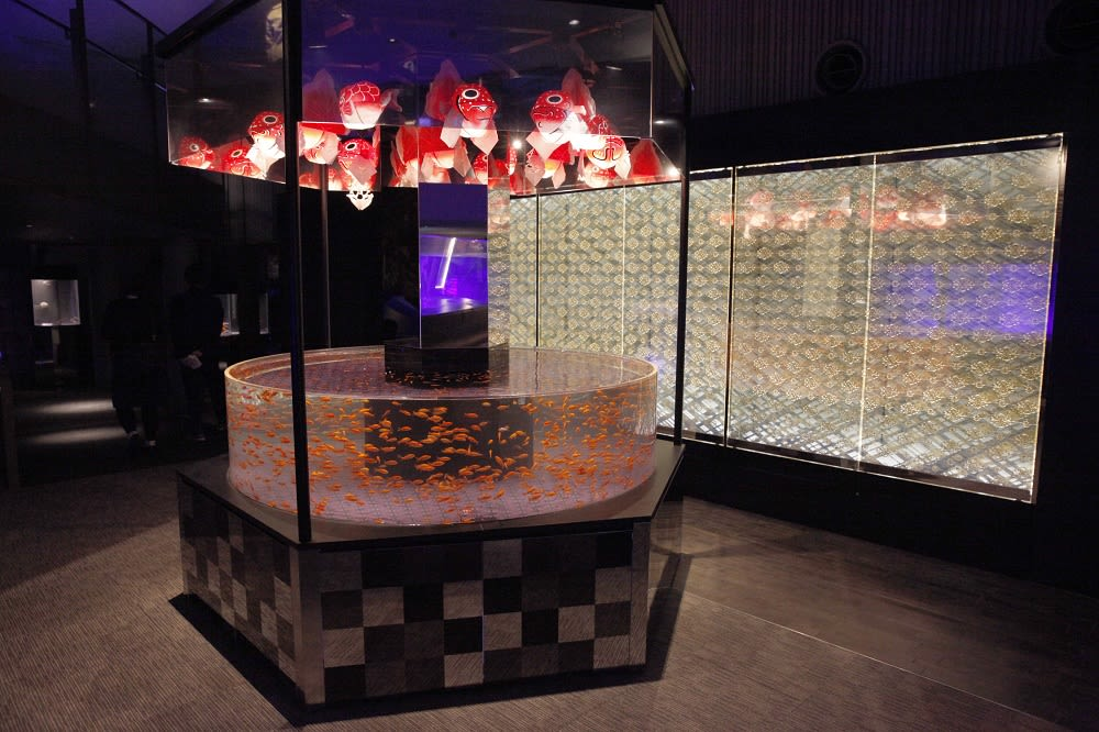 低調奢華的金魚展示區(圖片來源:https://goo.gl/W8JVWN)