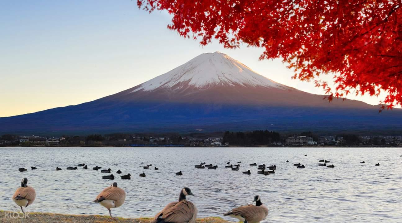 神聖又浪漫的富士山,美景隨四季變化。