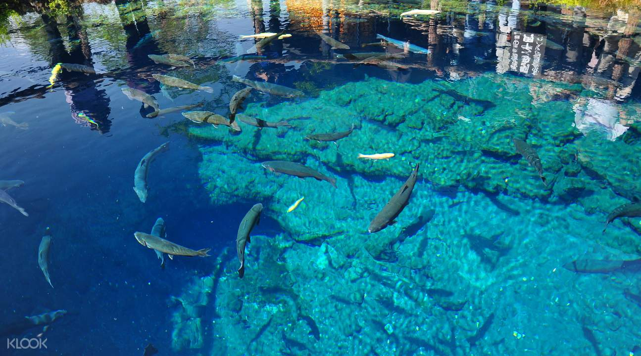清澈湛藍的泉水池,可見魚兒悠游。