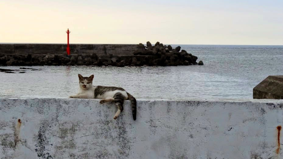 馬崗漁村隨處都能看見懶洋洋的貓咪。