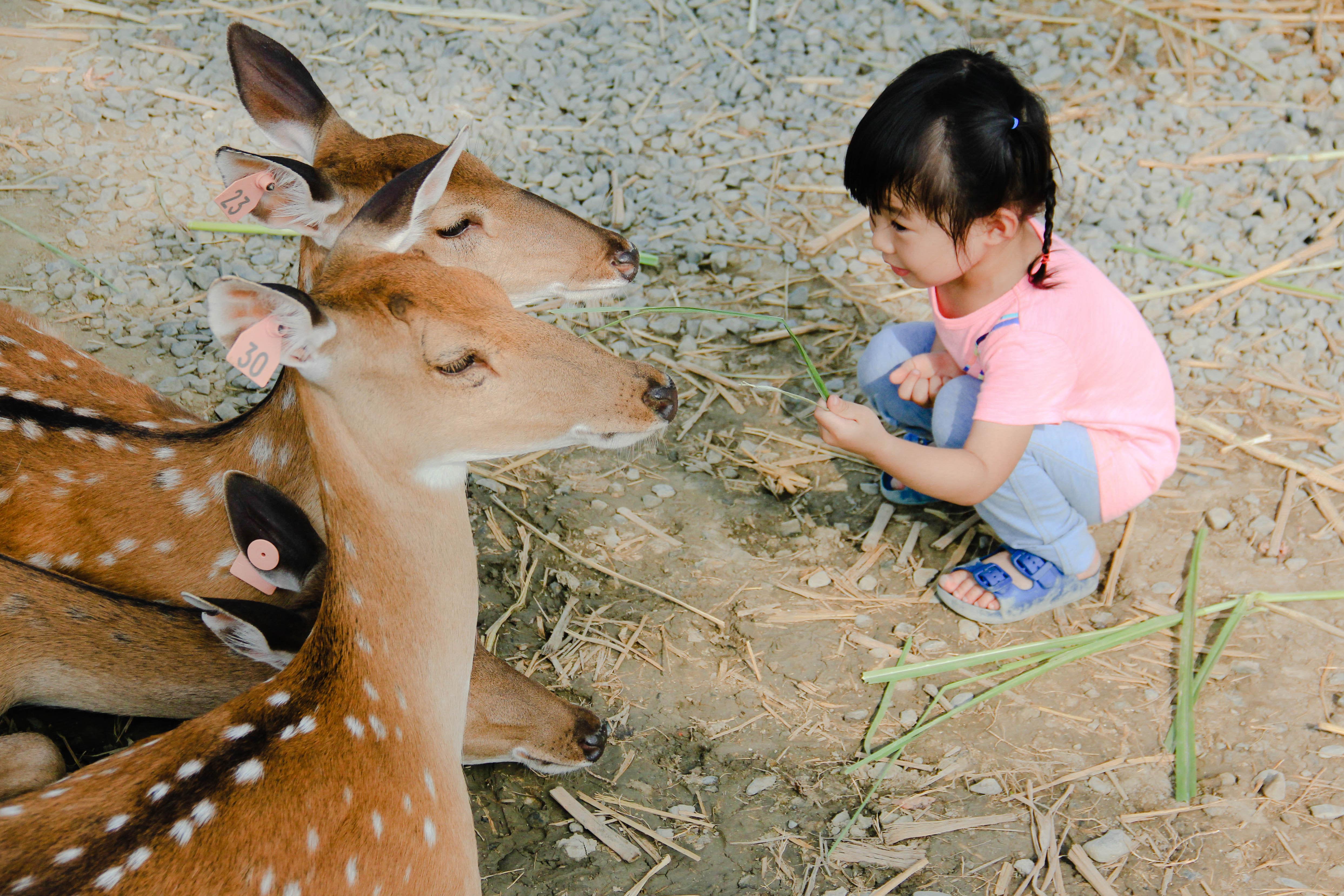 適合帶小朋友前來與鹿兒相處