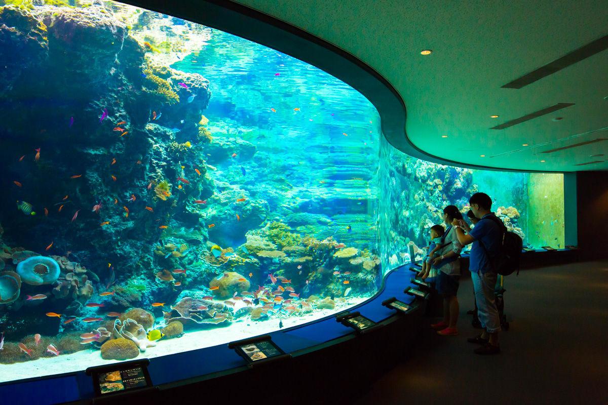 豐富的珊瑚礁生態呈現眼前。(圖片取自沖繩美麗海水族館官方網站)