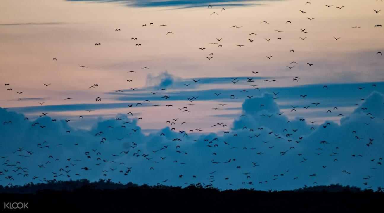 在北島或帕米拉坎島的夕陽下感受動物天堂的和諧