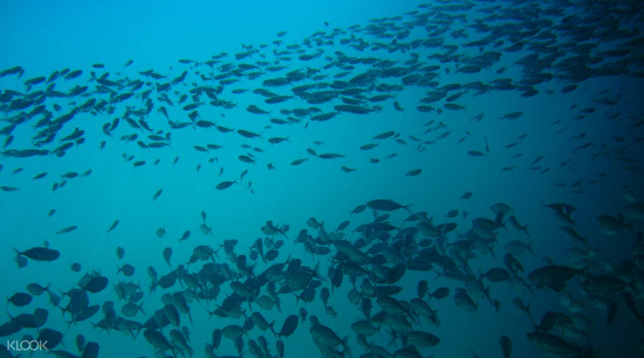 無數種類的熱帶魚成群結隊在身邊有過,在科隆島珊瑚群中自由穿梭