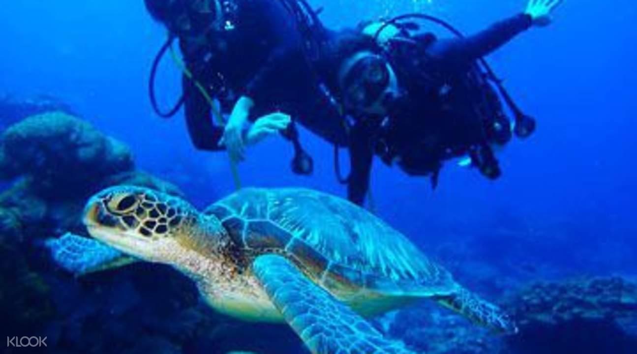 和魚兒一樣在水底悠遊,看見大海龜從身邊經過,何等幸運。