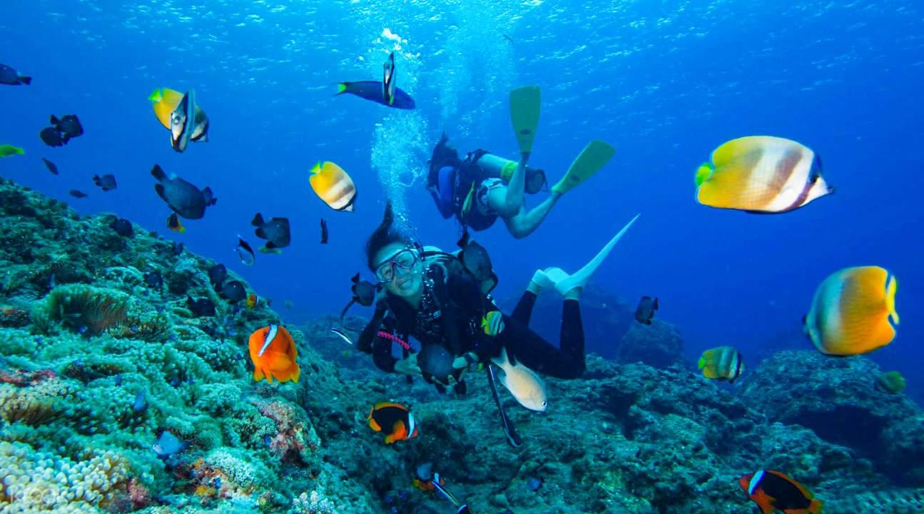 蘭嶼潛水,海底下蘊藏美麗的寶藏。