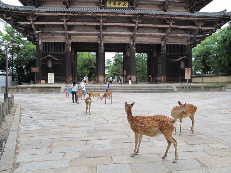 奈良的小鹿。