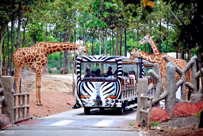 清邁夜間動物園 ,來源:KLOOK