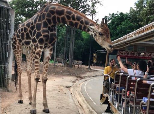 「遊園遊覽車」可以零距離和觀察動物。來源:KLOOK。