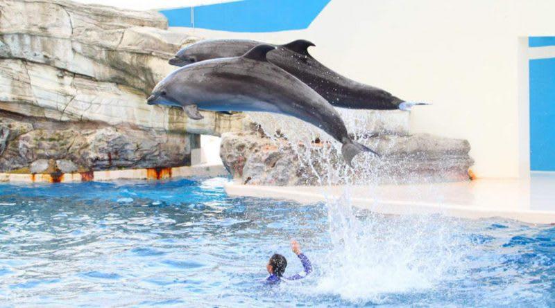 花蓮遠雄海洋公園,來源:KLOOK
