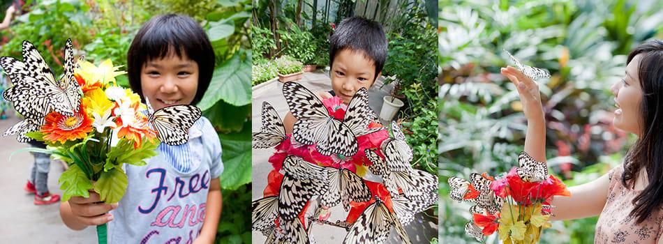數量龐大的美麗蝴蝶,妝點了整個展示區。(圖片取自琉宮城蝴蝶園官網)