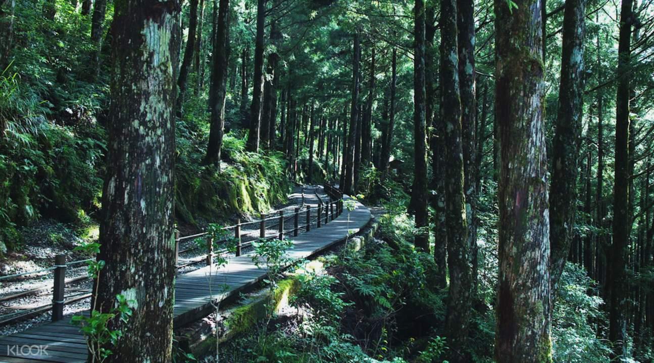 太平山森林浴與溫泉