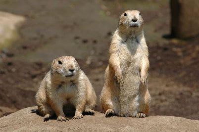 江戶川自然公園,來源:江戶川動物園官網