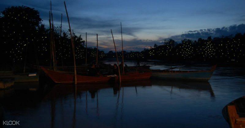 雪蘭莪螢火蟲夜遊,來源:KLOOK