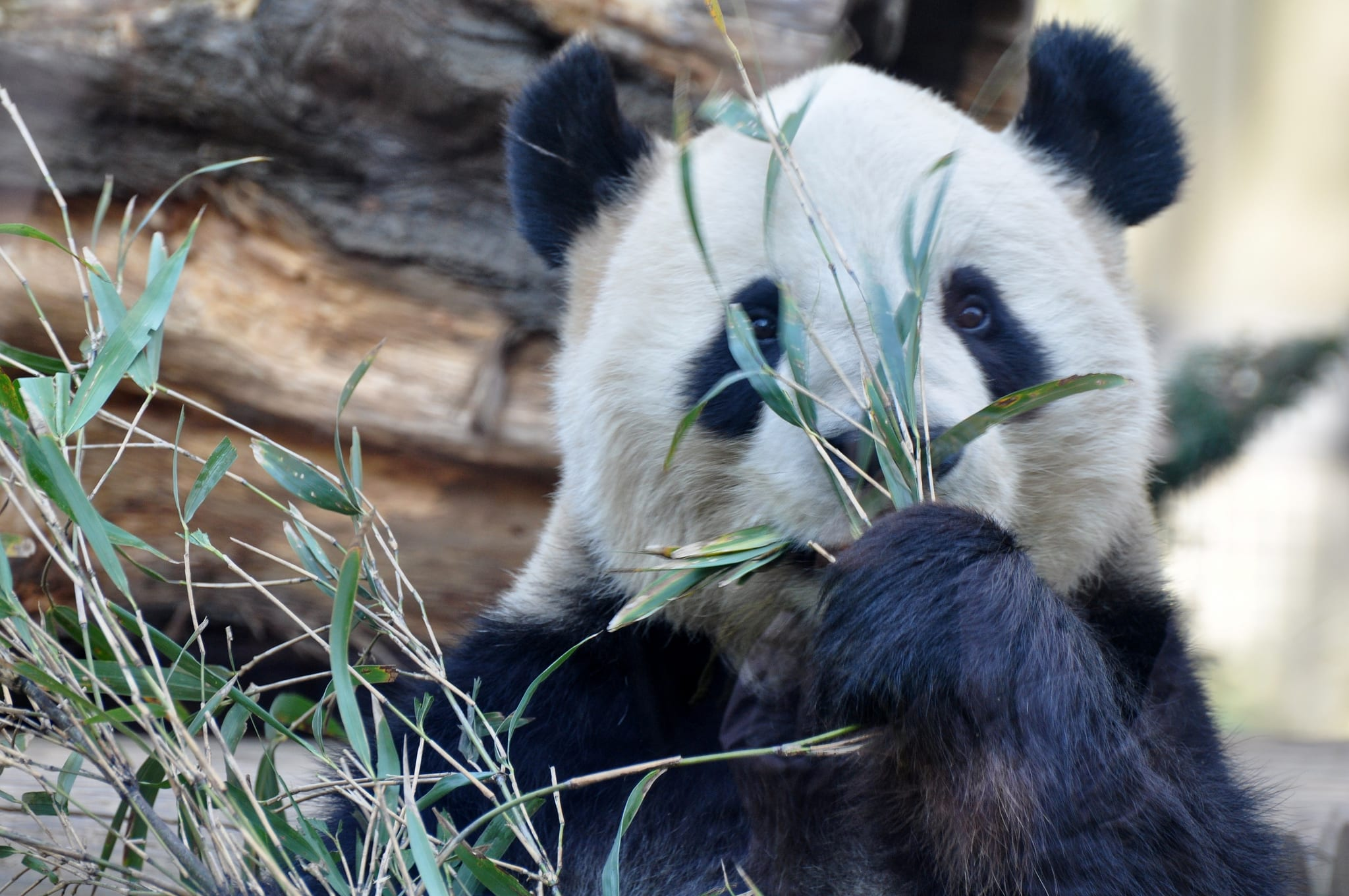 上野動物園,取自:TAKA@P.P.R.S