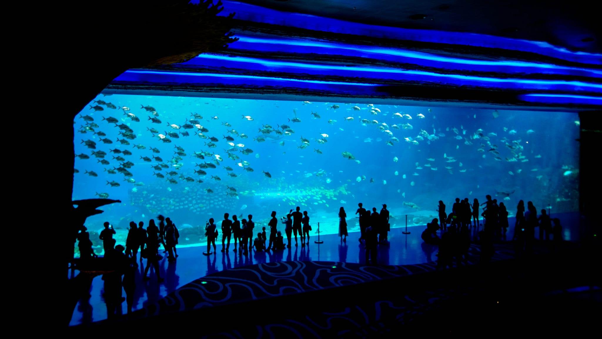 珠海長隆海洋王國,取自:Flickr Shiyu Zhou