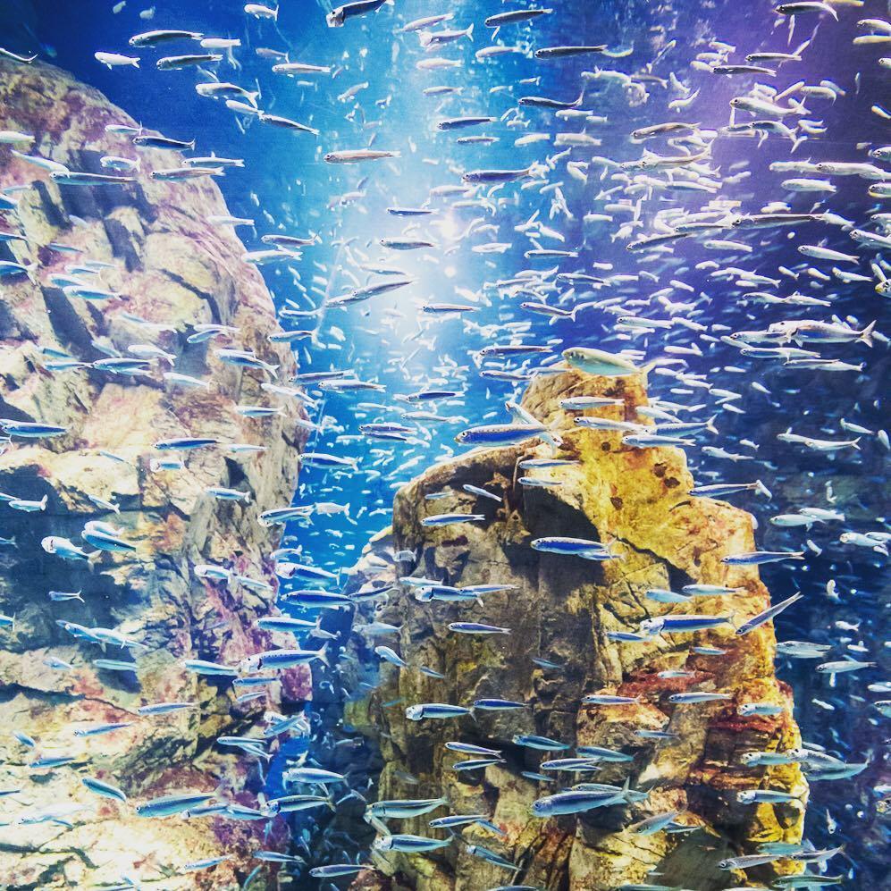 大阪海遊館,取自:大阪海遊館IG