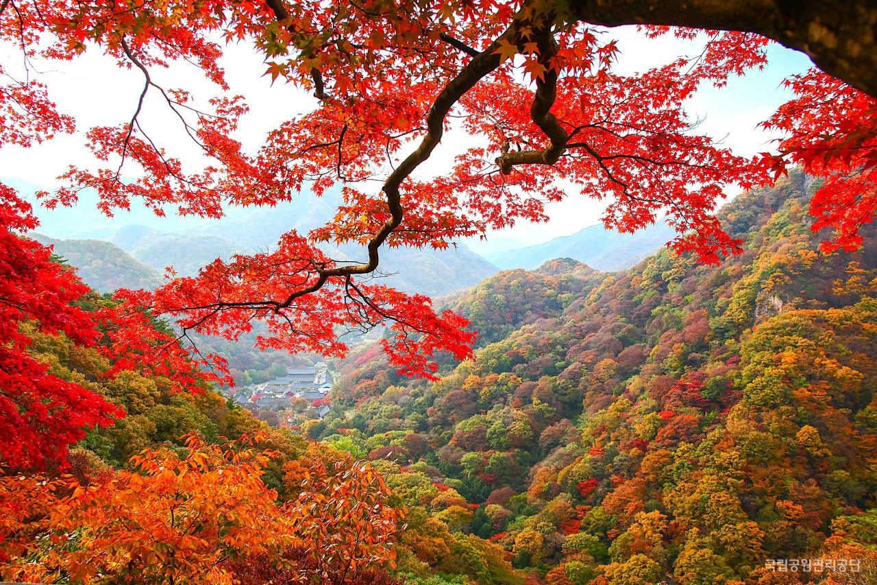內藏山國立公園,圖片取自http://www.knps.or.kr 。