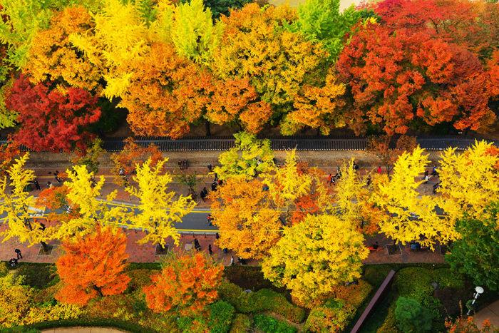 德壽宮石牆路,圖片取自韓國觀光公社官網。