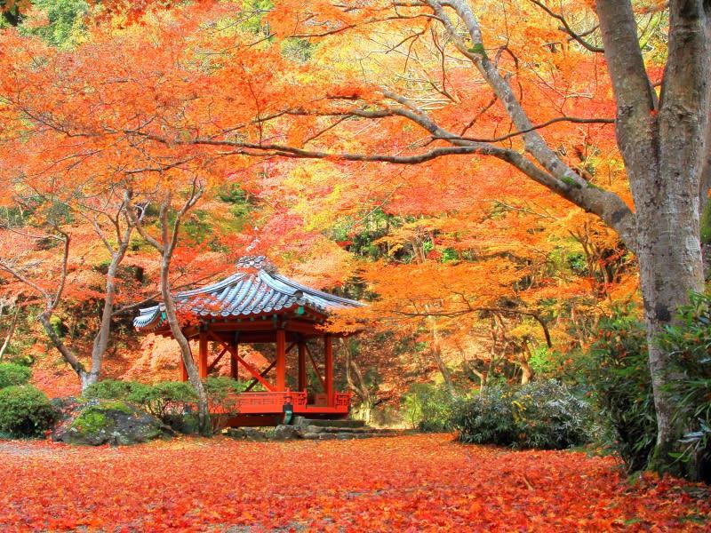 紅葉谷公園,圖片取自tripnote.jp。