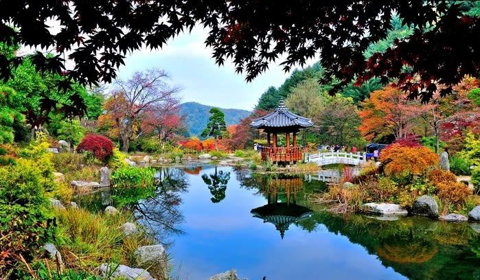 晨靜樹木園,圖片取自韓國觀光公社官網。