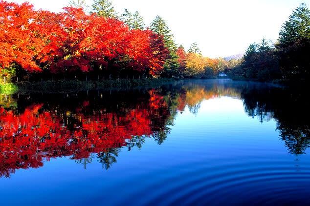 輕井澤雲場池,圖片取自www.slow-style.com。