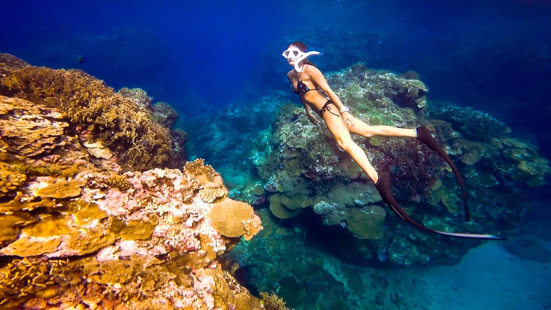 能見度極高的蘭嶼水下風景