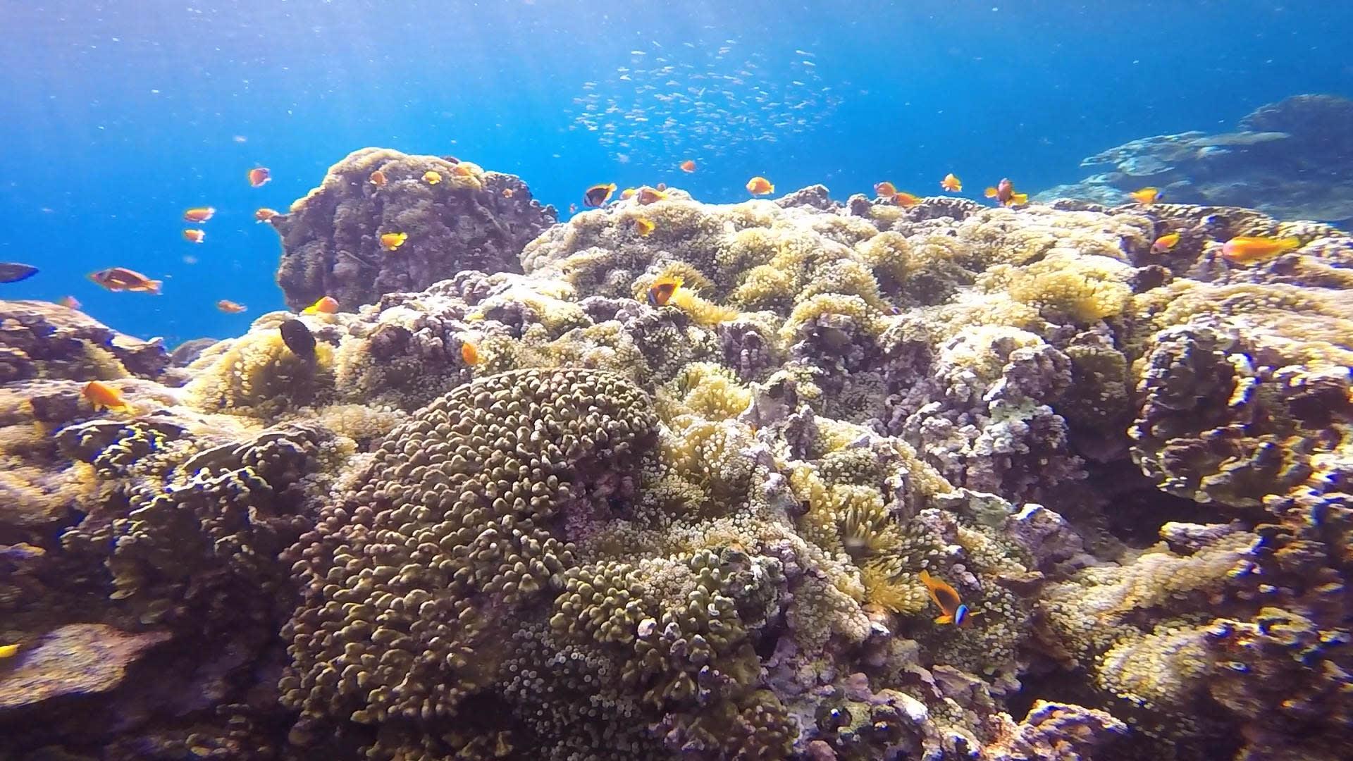 豐富的水下生態